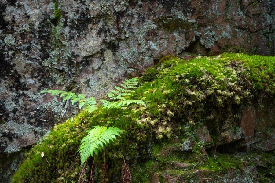 Naturen_är_avstressande