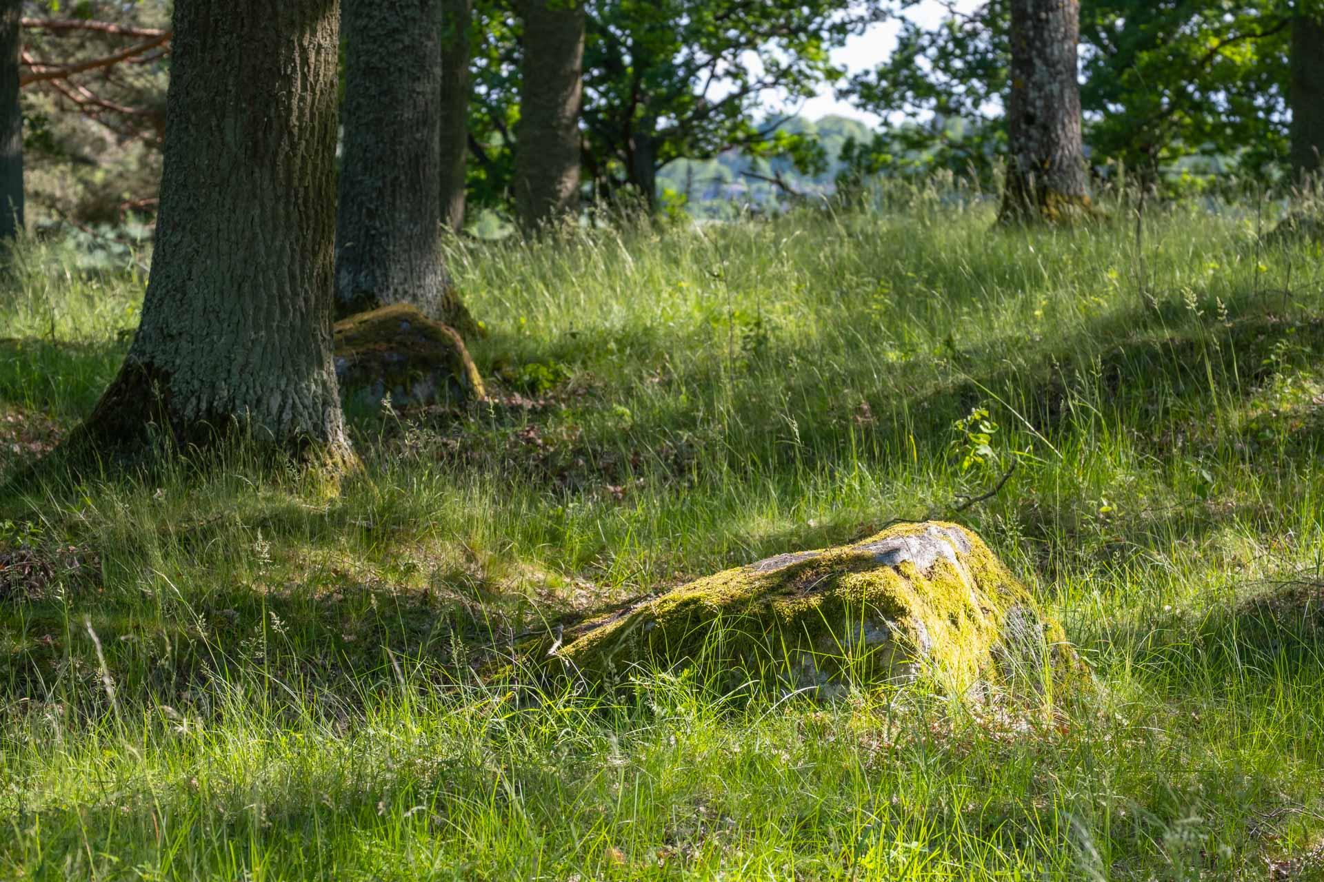 Bildfeeling sten i skog